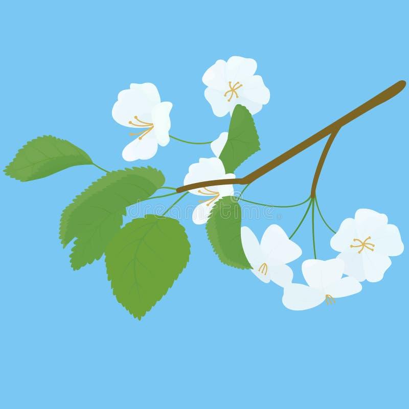 Het tot bloei komende Apple-Takje van de Boomlente op blauw royalty-vrije illustratie