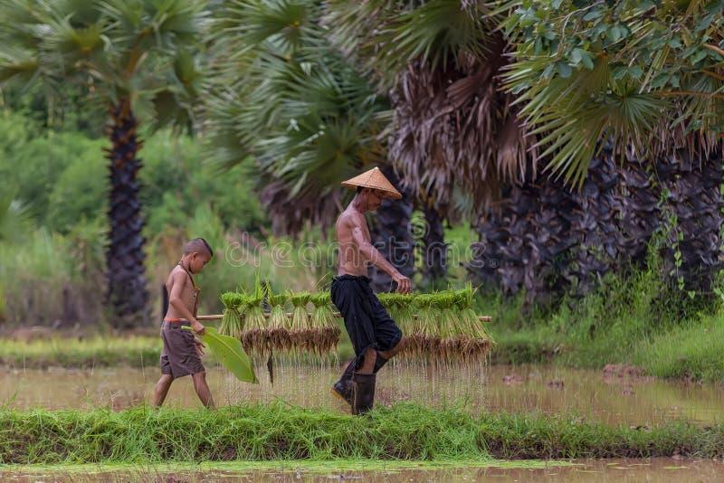 Het traditionele leven van famer in platteland Thailand royalty-vrije stock fotografie