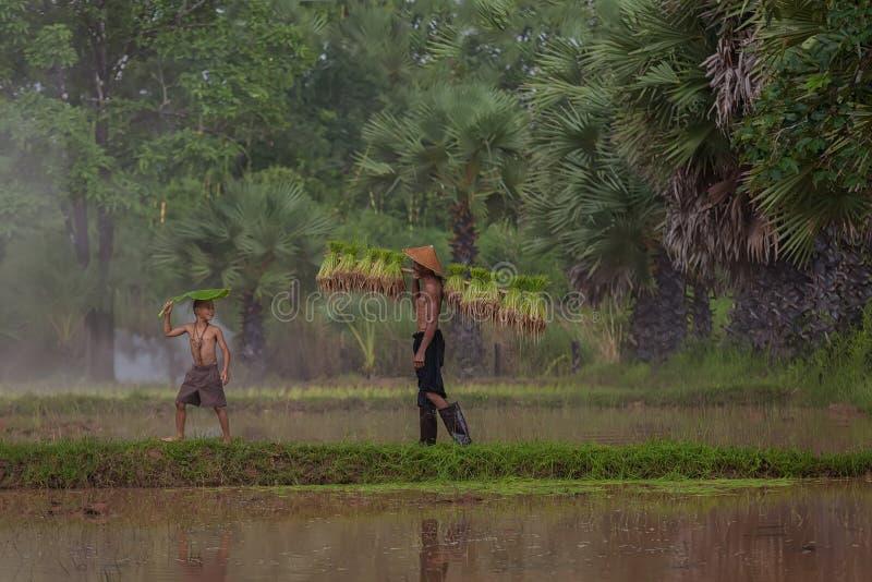 Het traditionele leven van famer in platteland Thailand stock fotografie