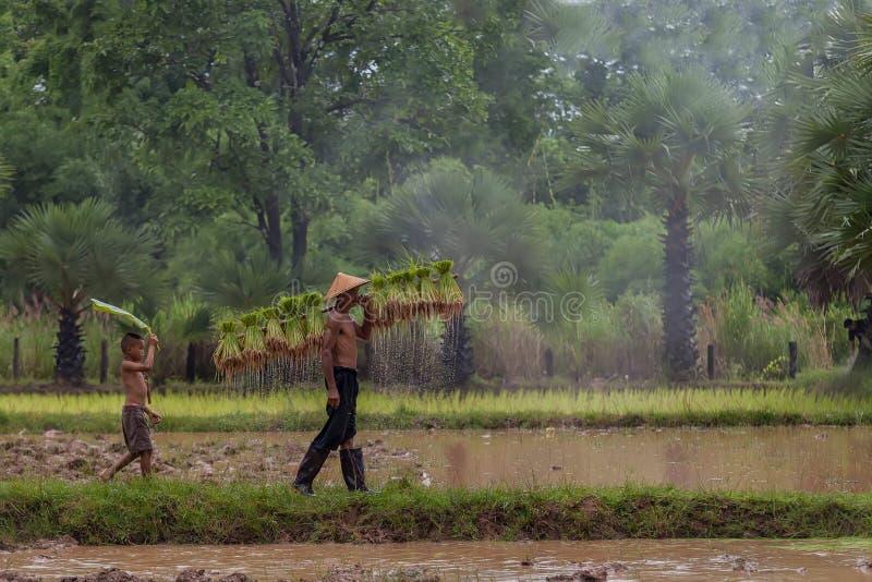 Het traditionele leven van famer in platteland Thailand stock foto's