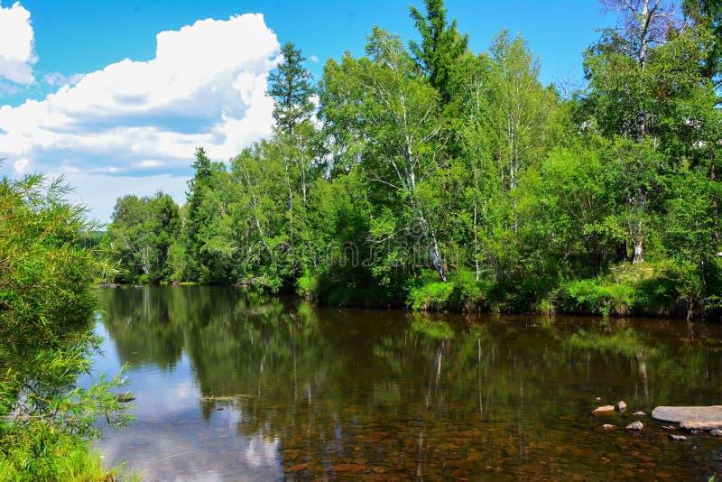 Het transparante water van een rivier tegen een achtergrond van groene bomen sluit omhoog Bos landschap royalty-vrije stock foto