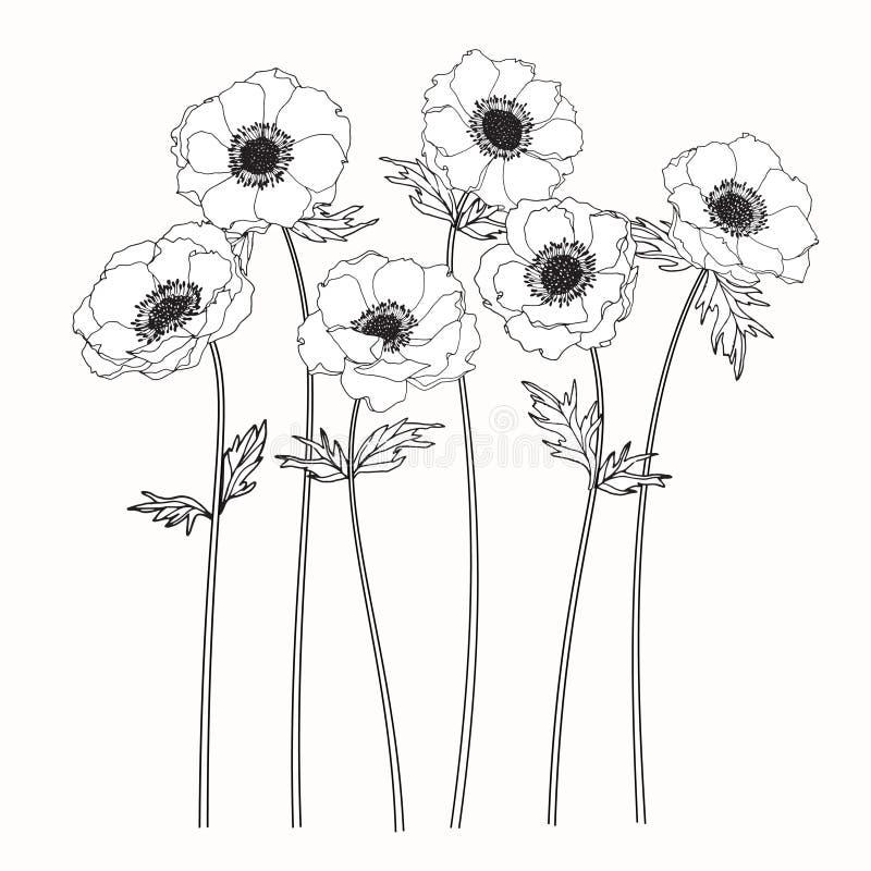 Het trekken en de schets van anemoonbloemen met lijn-kunst royalty-vrije illustratie