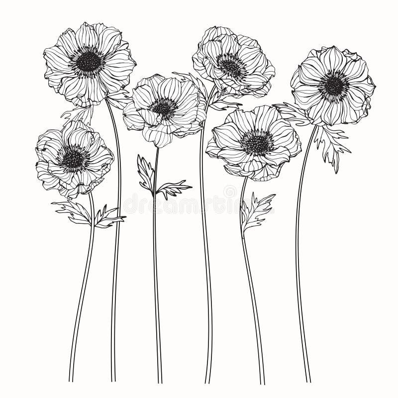 Het trekken en de schets van anemoonbloemen met lijn-kunst op witte backgr vector illustratie