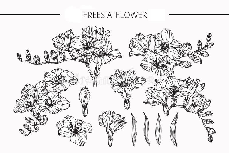 Het trekken en de schets van fresiabloemen met lijn-kunst royalty-vrije illustratie