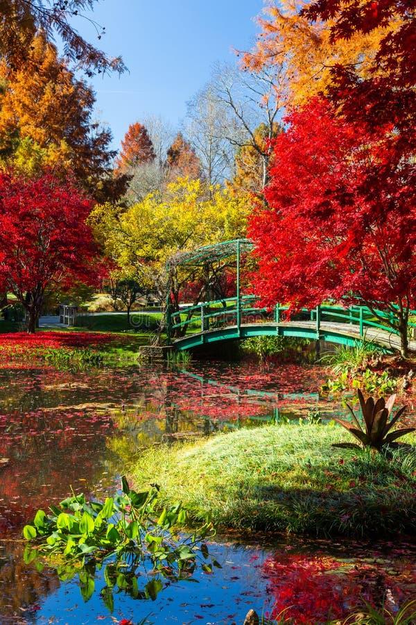 Het trillende rode, gele en oranje gebladerte in Gibbs tuiniert in de herfst in Georgië stock afbeelding