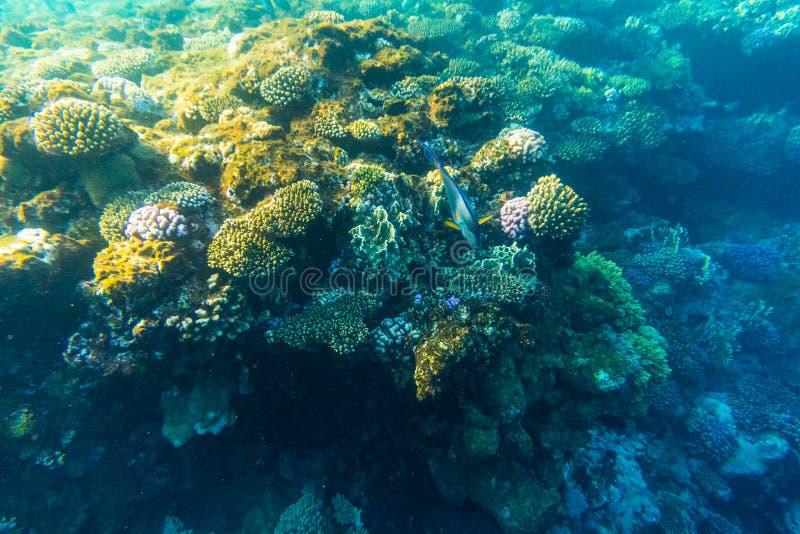 Het tropische oceaanleven Koraalrifhoogtepunt van vissen die onder waterspiegel drijven Zonnestralenlicht door rimpelingen royalty-vrije stock foto