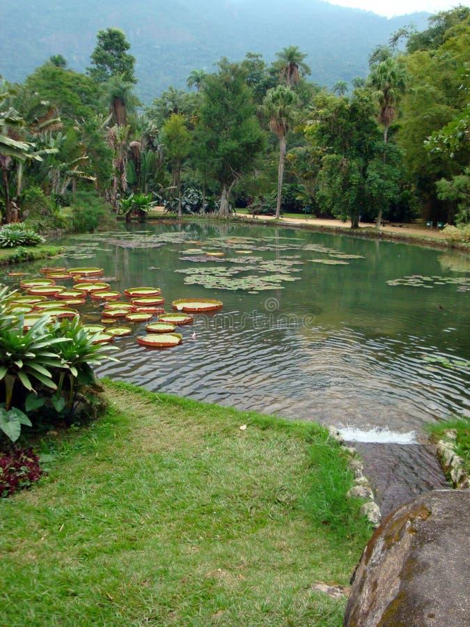 Het tropische Rio de Janeiro van de Tuin royalty-vrije stock fotografie