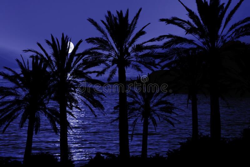 Het tropische Silhouet van de Nacht royalty-vrije stock fotografie