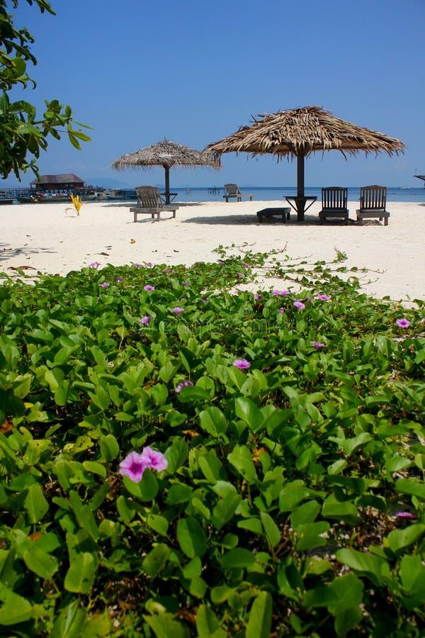 Het tropische Strand van het Eiland stock afbeelding