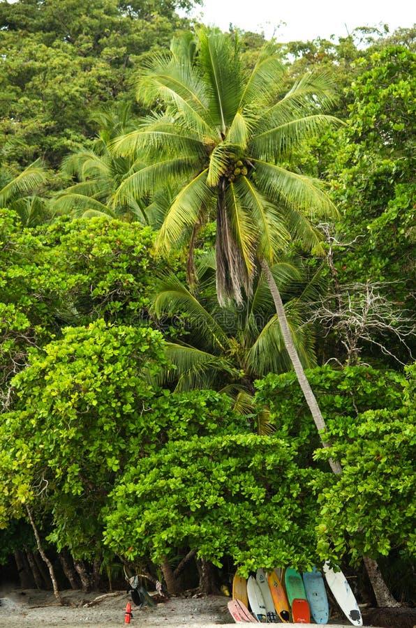 Het tropische strand van Manuel Antonio - Costa Rica royalty-vrije stock afbeelding