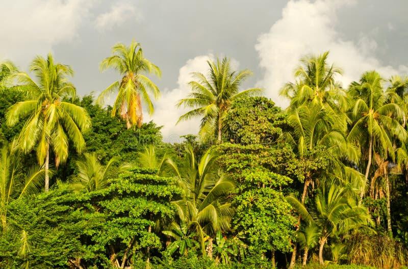 Het tropische strand van Manuel Antonio - Costa Rica royalty-vrije stock foto's