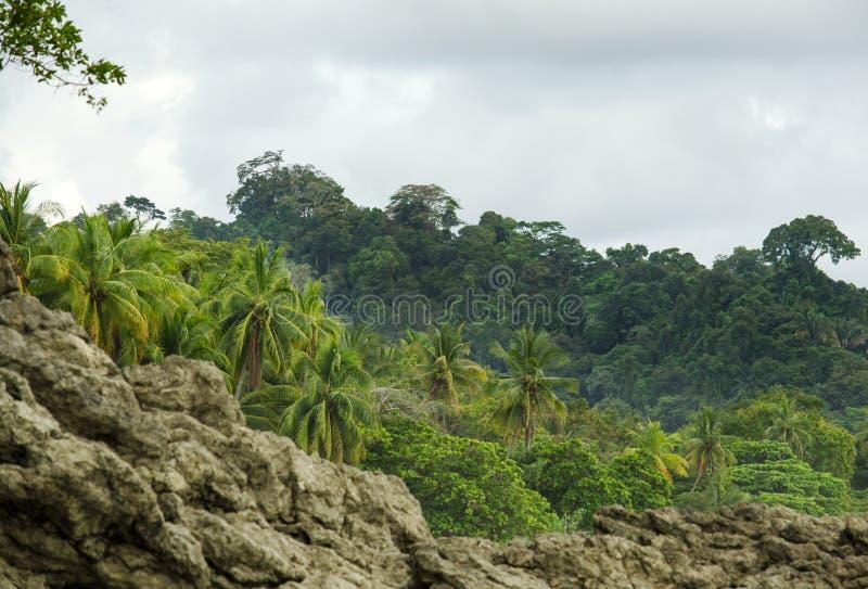 Het tropische strand van Manuel Antonio - Costa Rica stock afbeelding
