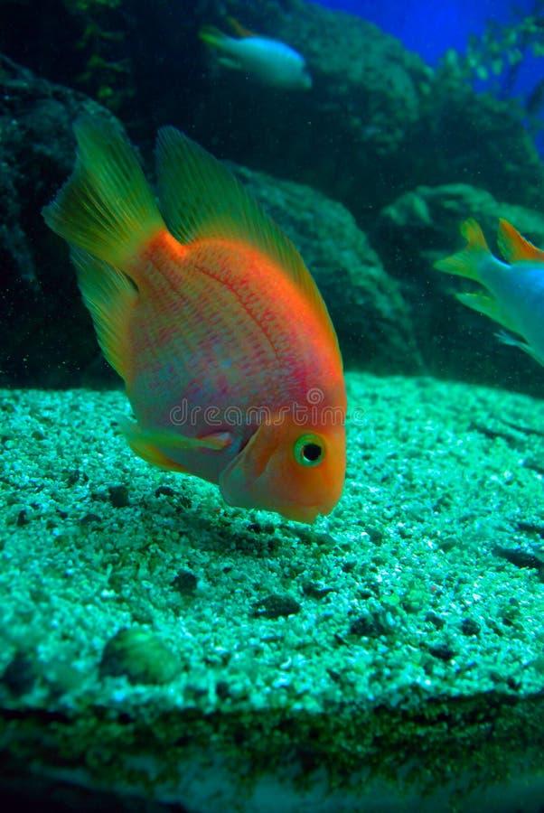 Het tropische vissen voeden royalty-vrije stock afbeelding