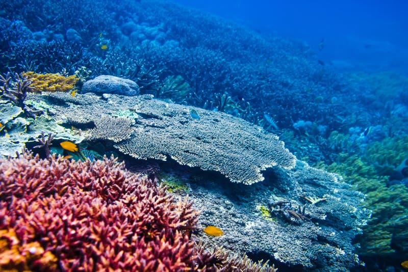 Het tropische wild: rode koralen en vissen in Indische Oceaan stock afbeeldingen