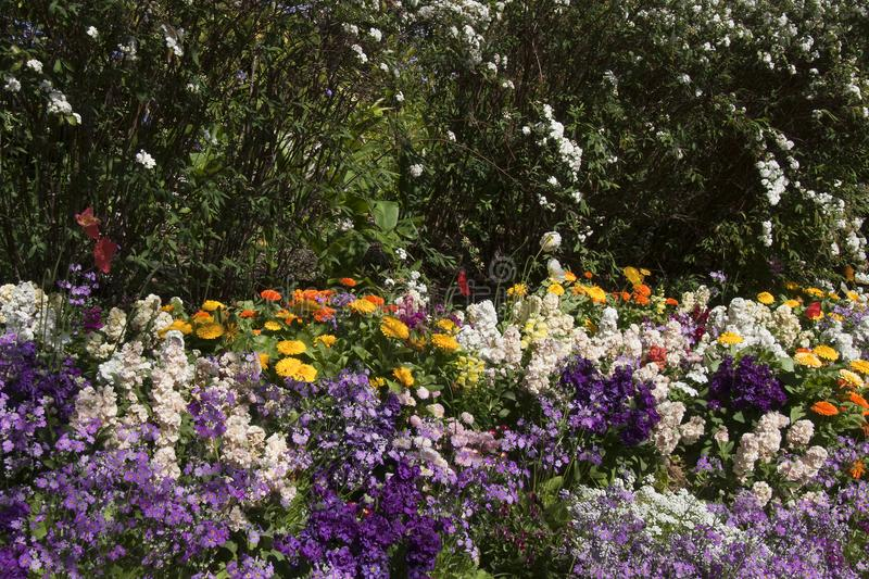Het tuinbed van de lente bloeit en kan haag ringen stock fotografie