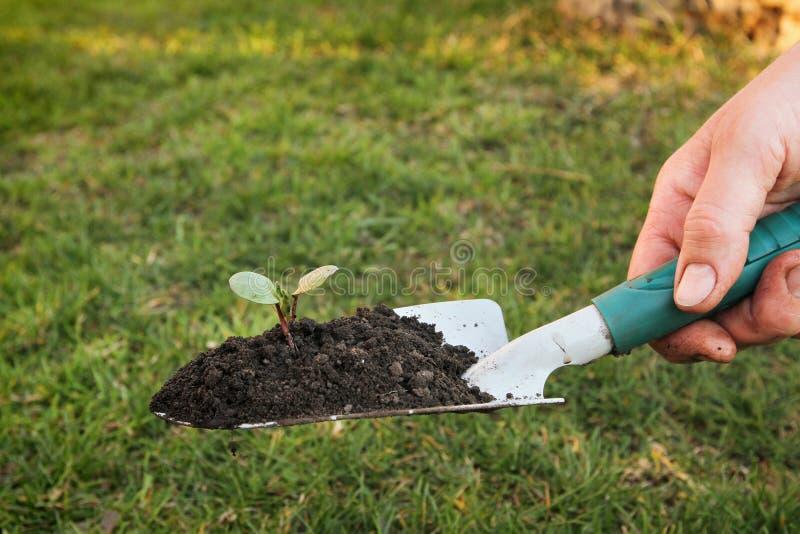 Download Het tuinieren stock afbeelding. Afbeelding bestaande uit gecultiveerd - 29504981