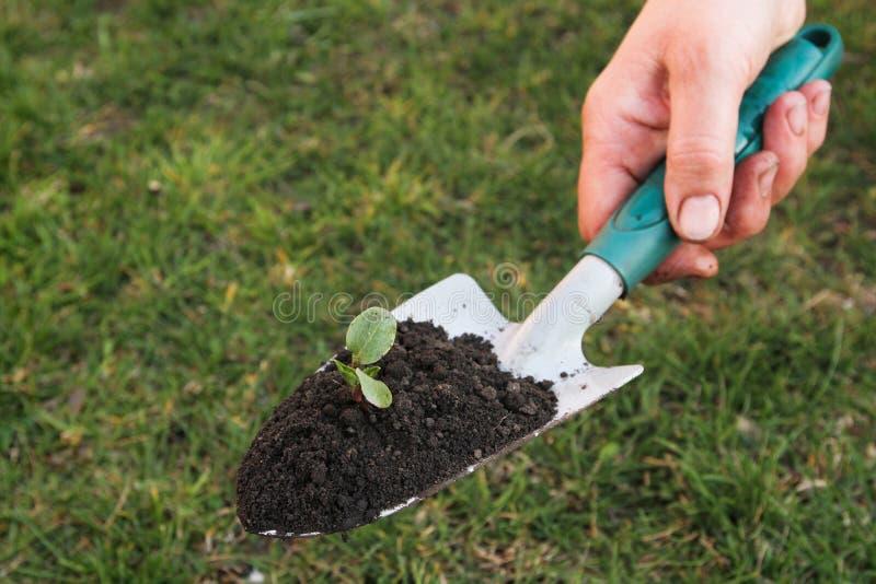 Download Het tuinieren stock afbeelding. Afbeelding bestaande uit sluit - 29505051