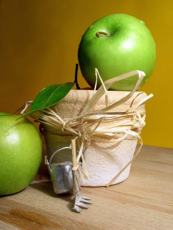 Het tuinieren: appelen stock afbeeldingen