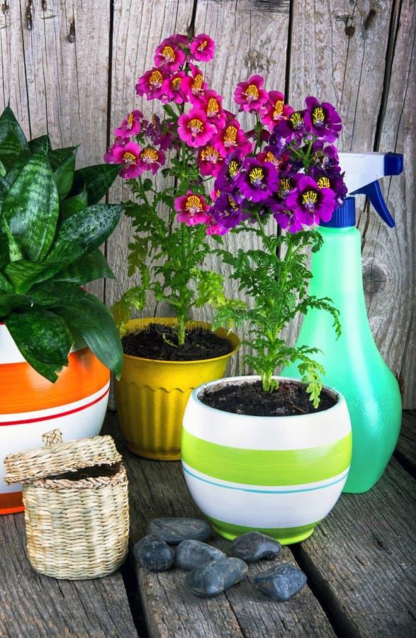 Download Het tuinieren bloemen stock afbeelding. Afbeelding bestaande uit flowerpot - 54079615