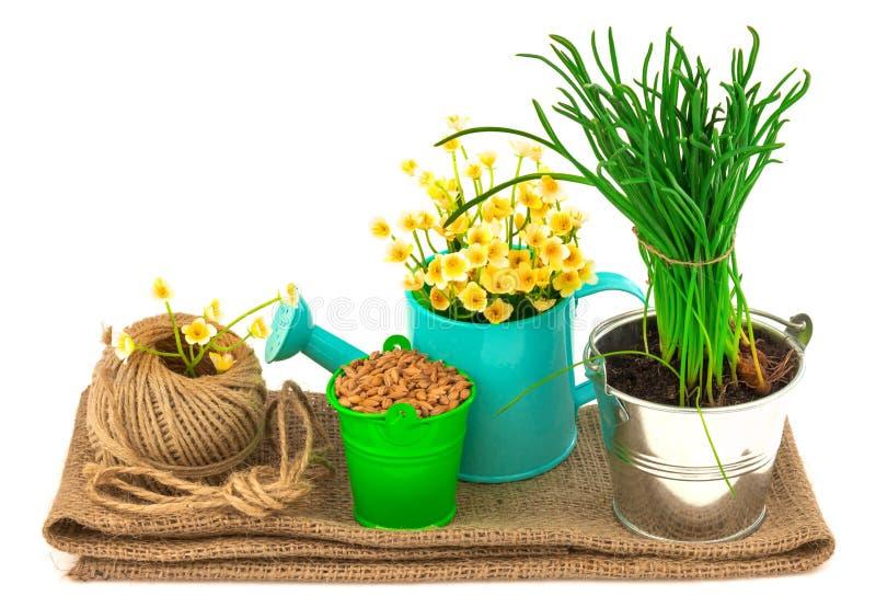 Het tuinieren concept met gras, zaden, bloemen, streng royalty-vrije stock afbeelding