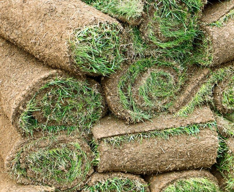 Het tuinieren: de broodjes van het grasgras stock fotografie