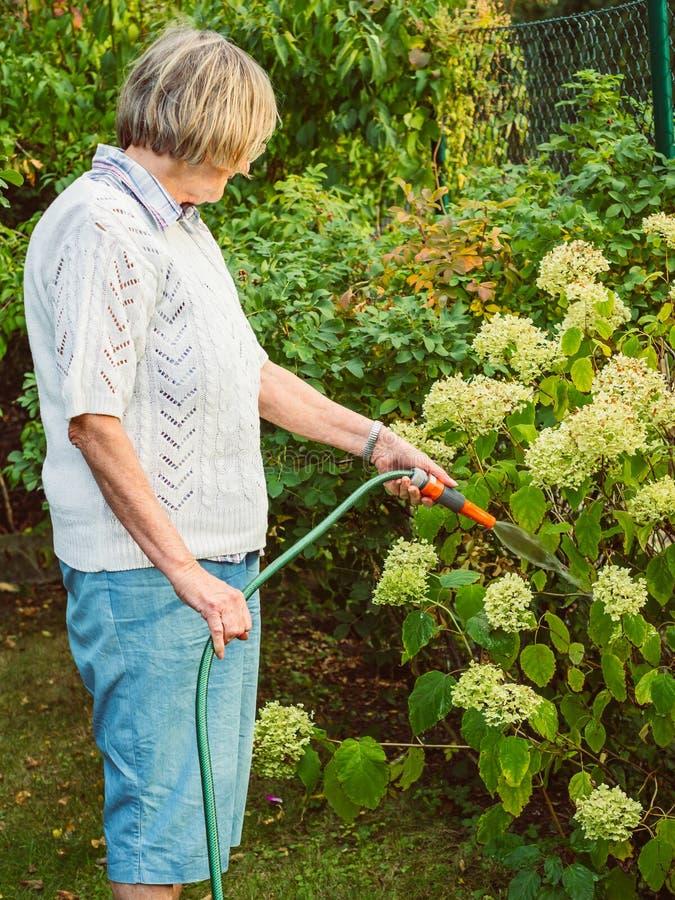 Het tuinieren - de hogere vrouw geeft de bloemen water royalty-vrije stock afbeeldingen