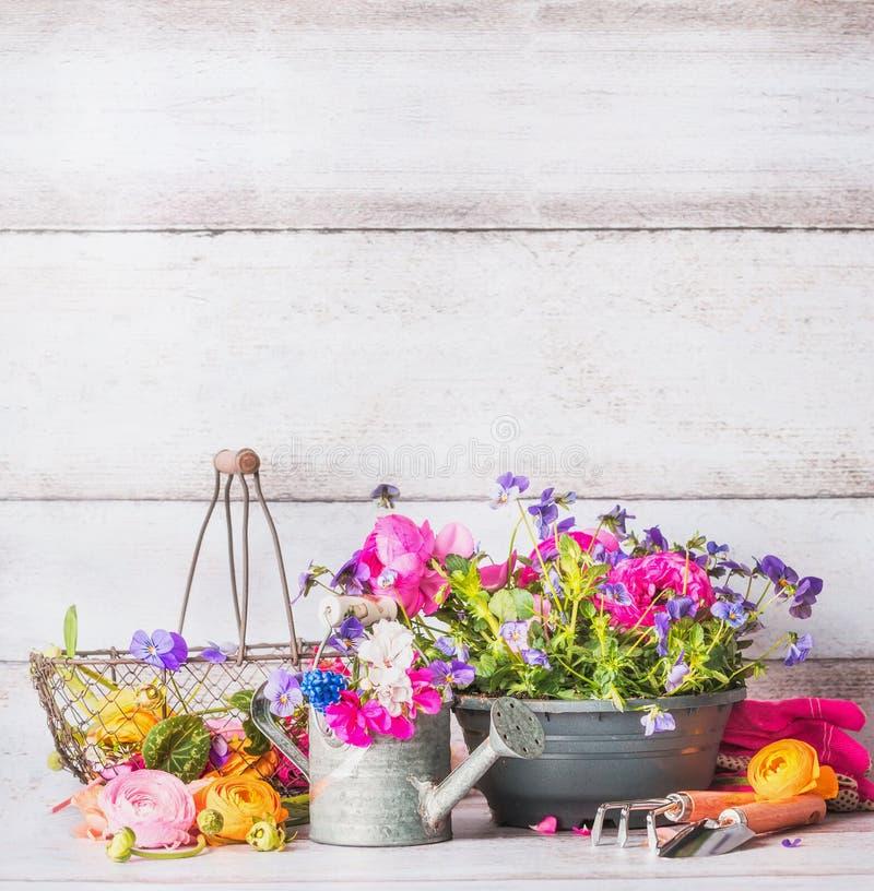 Het tuinieren de hulpmiddelen met bloemen planten op terras of werf bij witte houten muur Gieter, schop, bloemenpot en mand stock afbeelding