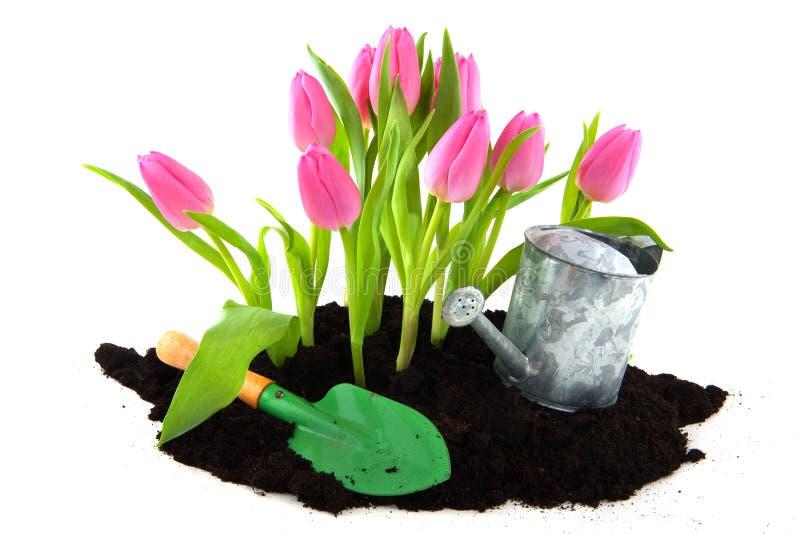 Het tuinieren in de lente stock foto