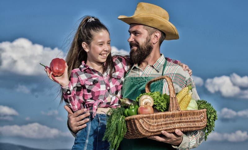 Het tuinieren en het oogsten Het concept van het familielandbouwbedrijf De organische slechts en verse gebaarde rustieke landbouw stock fotografie