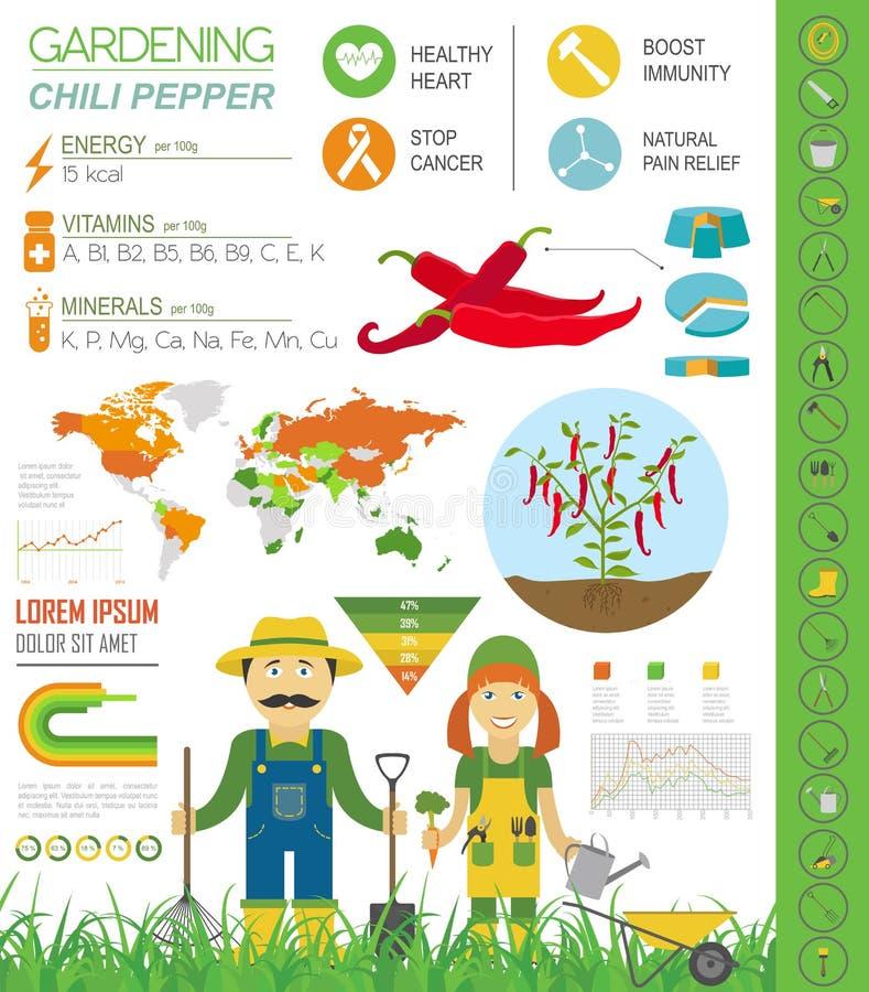 Het tuinieren het werk, infographic de landbouw De peper van de Spaanse peper Grafische templa vector illustratie