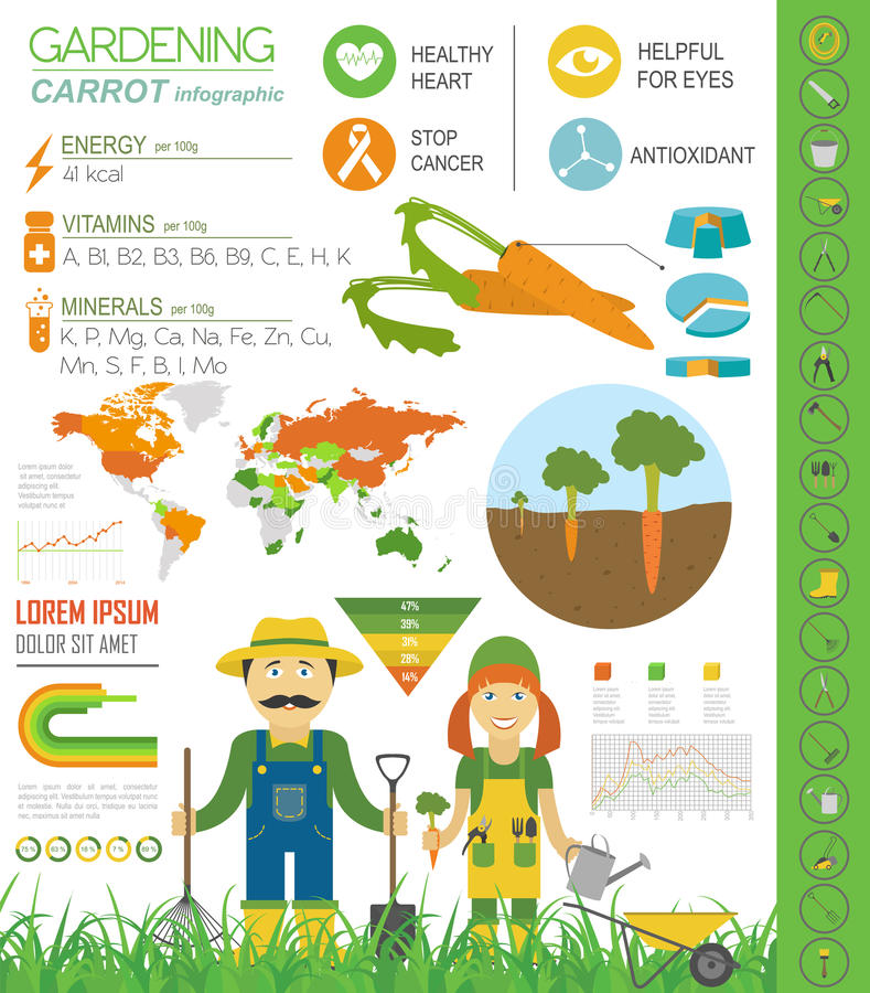 Het tuinieren het werk, infographic de landbouw Wortel Grafisch malplaatje F vector illustratie