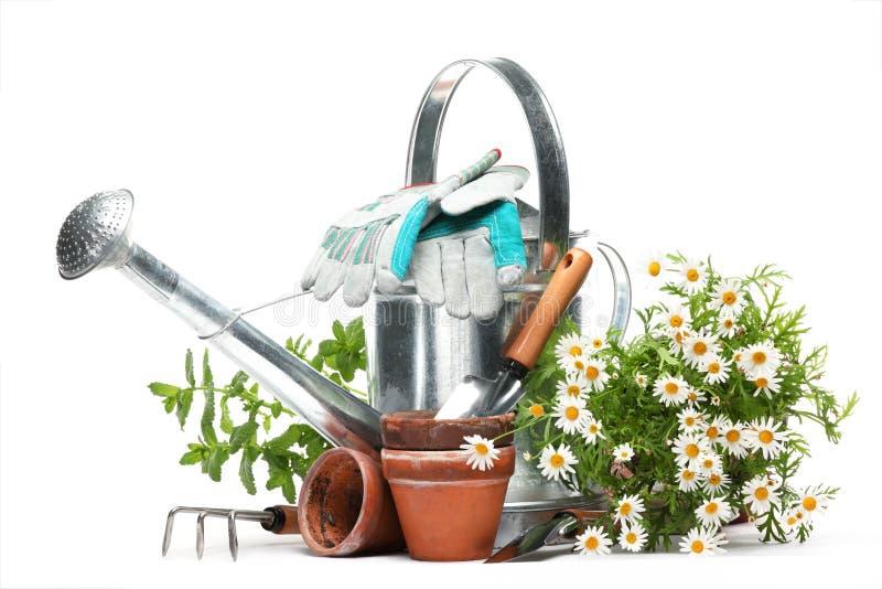 Het tuinieren hulpmiddelen en bloemen royalty-vrije stock afbeeldingen