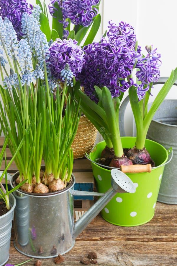 Het tuinieren Hulpmiddelen en Bloemen stock afbeelding