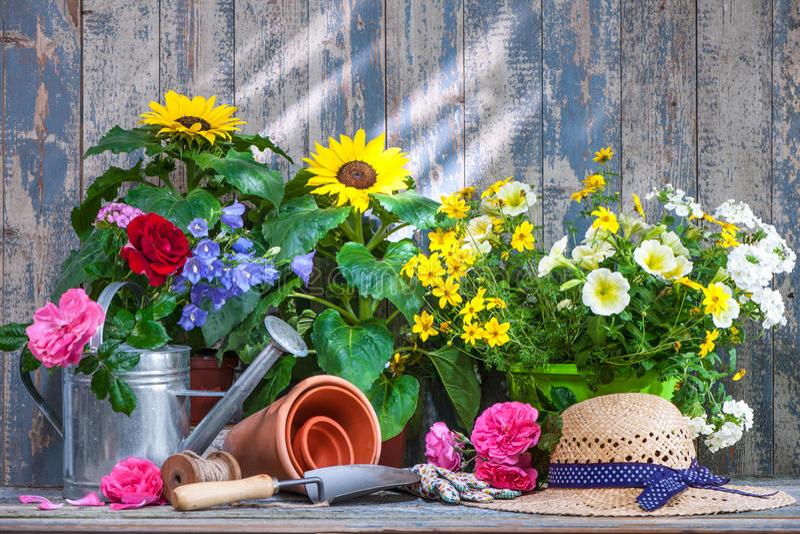 Het tuinieren hulpmiddelen en bloemen op het terras stock afbeelding