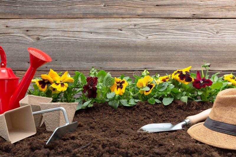 Het tuinieren hulpmiddelen en de bloemen van het de lenteviooltje op het terras in de tuin Het tuinieren concept royalty-vrije stock foto