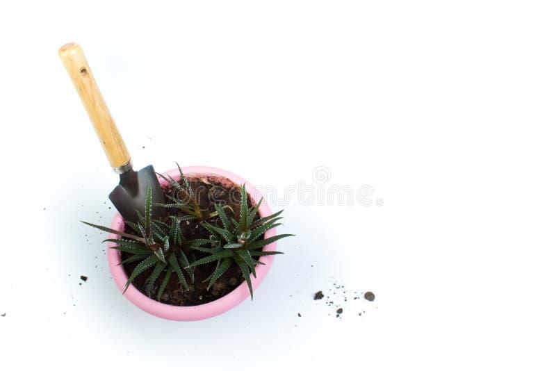 Het tuinieren hulpmiddelen hoogste mening over witte achtergrond met exemplaarruimte rond producten Haworthia stock afbeelding