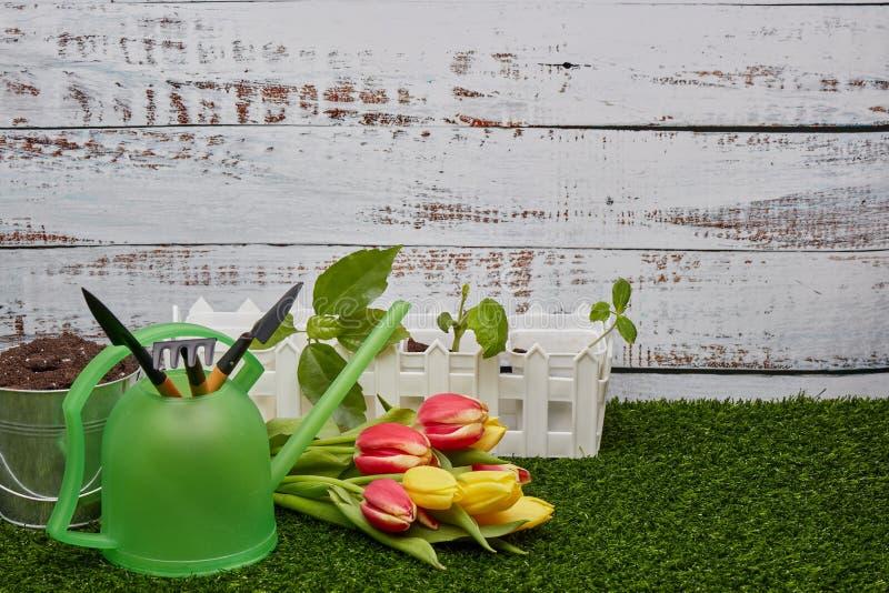 Het tuinieren hulpmiddelen, spruiten en bloemen royalty-vrije stock afbeeldingen