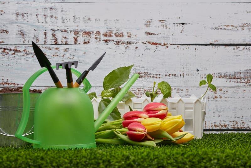 Het tuinieren hulpmiddelen, spruiten en bloemen stock foto