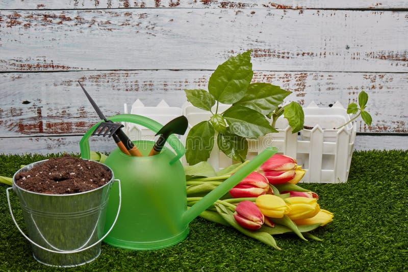 Het tuinieren hulpmiddelen, spruiten en bloemen royalty-vrije stock fotografie