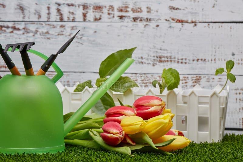 Het tuinieren hulpmiddelen, spruiten en bloemen royalty-vrije stock foto's