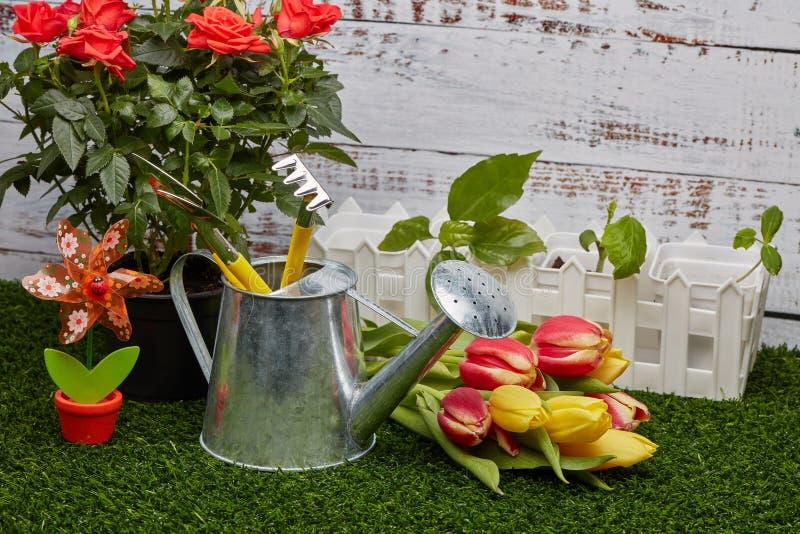 Het tuinieren hulpmiddelen, spruiten en bloemen stock afbeeldingen