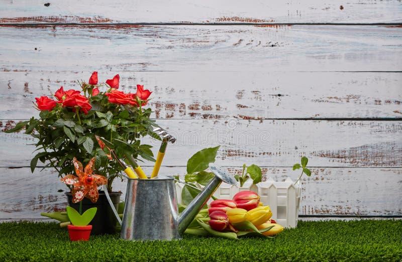 Het tuinieren hulpmiddelen, spruiten en bloemen stock fotografie