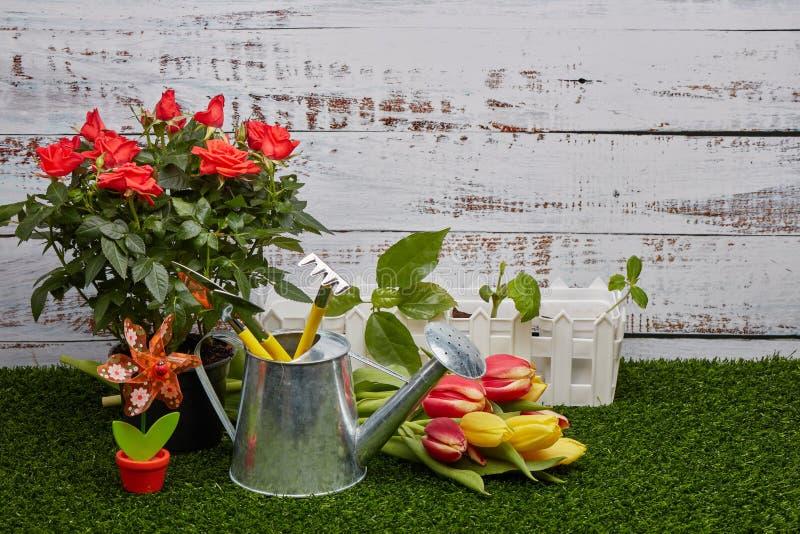 Het tuinieren hulpmiddelen, spruiten en bloemen stock afbeelding