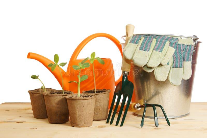 Het tuinieren stilleven met jonge zaailing over wit stock foto