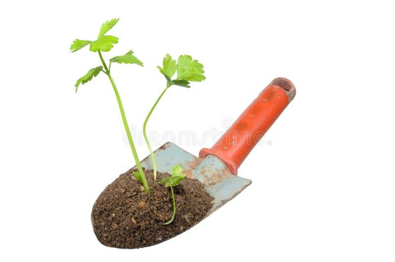 Het tuinieren troffel en installatie op isolate. stock afbeelding