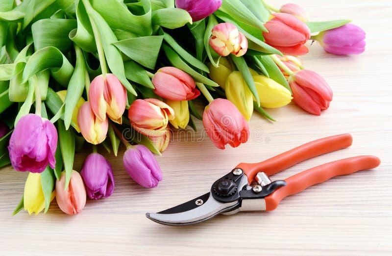 Het tuinieren tulpen en tuinscheerbeurt stock fotografie