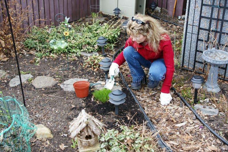 Het tuinieren van vrouwen stock foto's