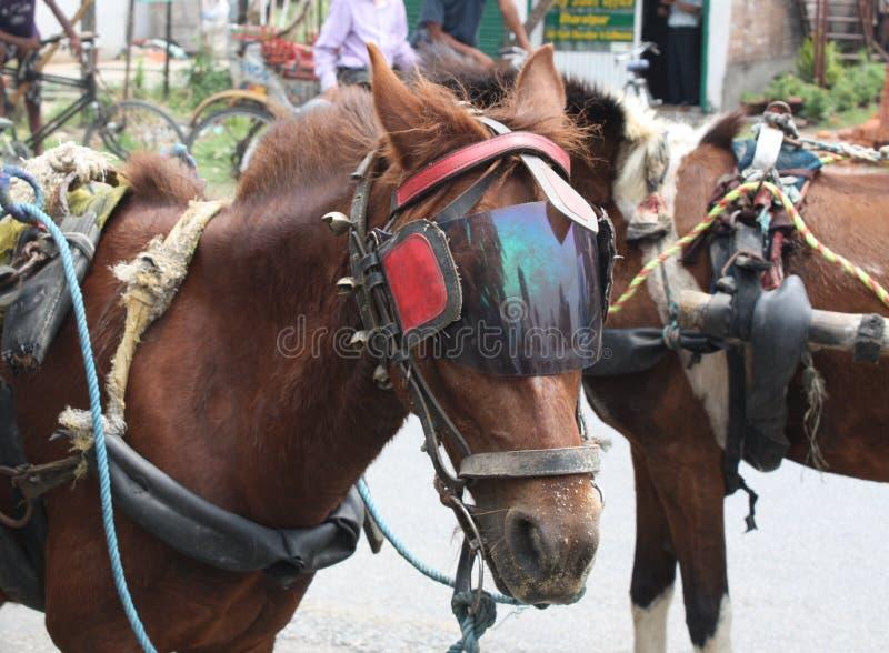 Het tunning van het paard royalty-vrije stock foto's