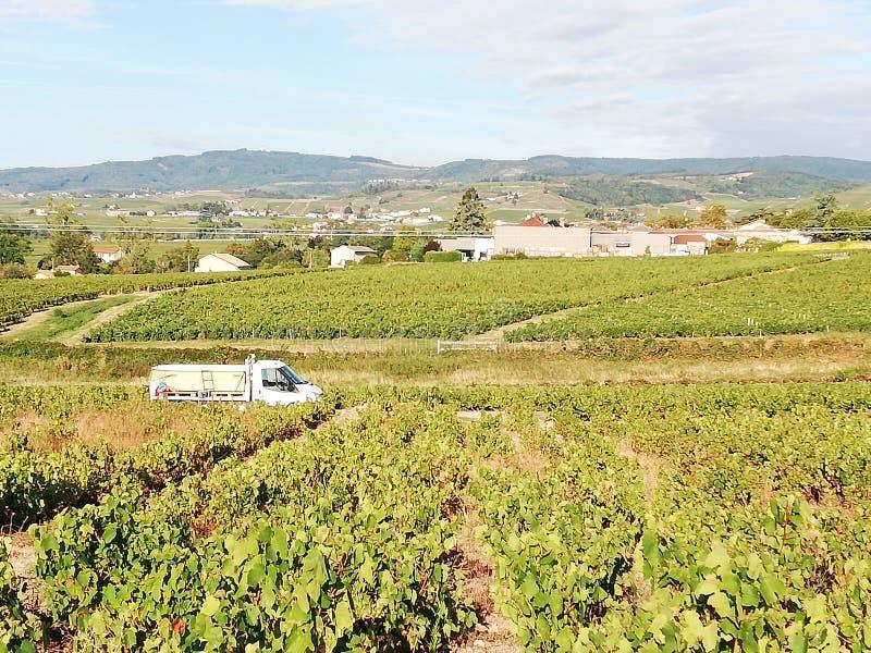 Het typische landschap in het gebied van Bordeaux in Frankrijk royalty-vrije stock foto's