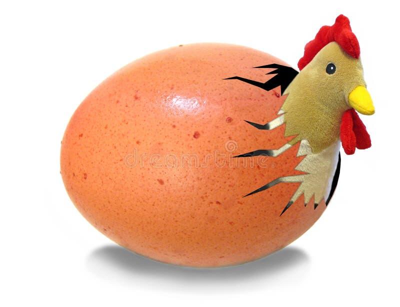 Het uitbroeden van de kip van ei royalty-vrije stock afbeeldingen